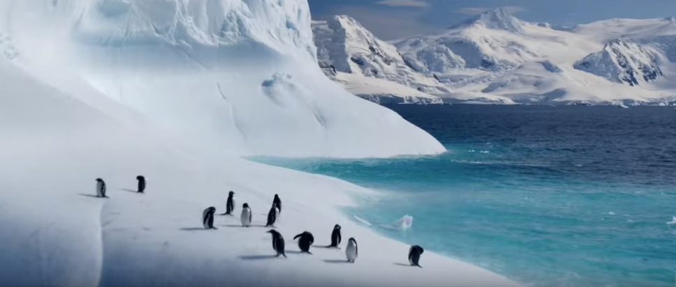 David Attenborough's new Netflix documentary trailer is everything you'd hoped for